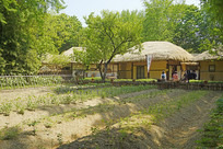 韩国民俗村田园-庄稼地