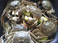 铁锅炖大闸蟹