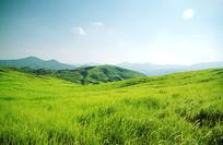 高远开阔的南方草原
