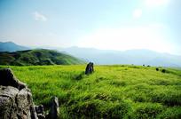 万亩大草原
