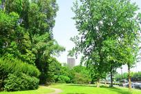 城市树林和草坪