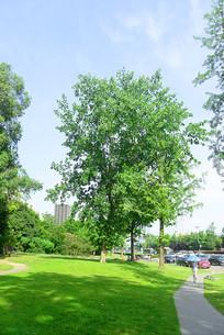 城市树林和草坪里的健身道