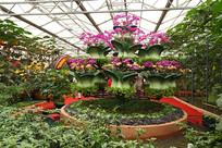 寿光菜博会景观之花卉