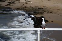 孤独的海鸥
