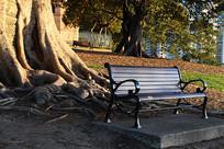 榕树下的椅子