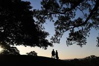 大树下的情侣