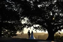 古树下的婚纱照