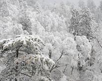 四川川藏线国道原始森林雪景