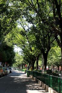 一排行道树