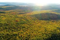 大兴安岭秋季林海山峦晨光