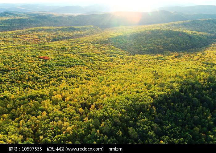 航拍大兴安岭秋季原始森林晨光图片