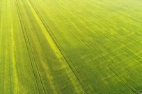 农田农作物景观(航拍)