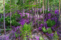 原始森林春季风光