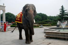 北京市世界公园的大象