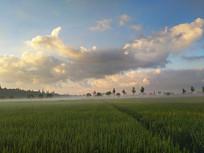 良田美景乡村