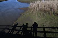 墨尔本天鹅湾湿地公园浮桥投影