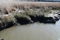 墨尔本天鹅湾湿地公园河岸