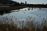 墨尔本天鹅湾湿地公园景观
