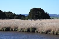 墨尔本天鹅湾湿地公园山水