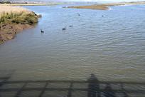 墨尔本野生动物园海面