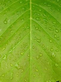 枝叶上的水珠