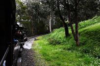 穿越丛林的小火车