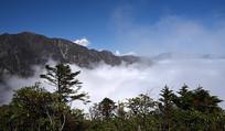 汶川盘龙山云海和雪松