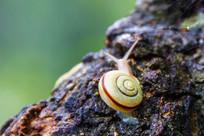 树上的一只蜗牛