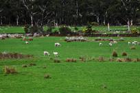 塔斯马尼亚草原