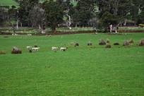 塔斯马尼亚草原牧场