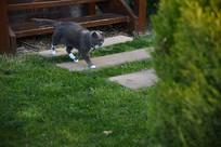 塔斯马尼亚霍巴特看家的猫