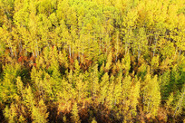 大兴安岭秋季森林风光