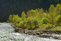 高原河谷的秋林和山溪