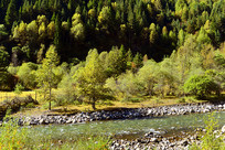 高原河谷的秋林和山溪河流