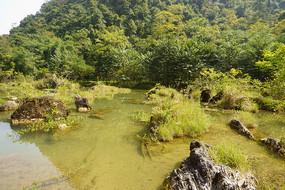 贵州荔波小七孔翠谷湿地