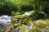 贵州荔波小七孔景区石上森林