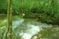 贵州小七孔景区响水河石上森林