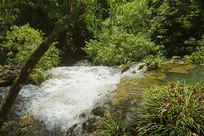 贵州小七孔-响水河-石上森林