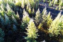 树林雾凇风景