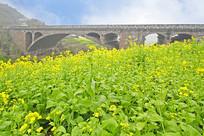 四川天全县烈羊背大桥的春天