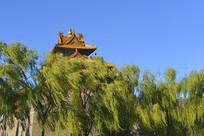 北京故宫角楼及风吹的杨柳