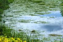 洪泽湖湿地生机