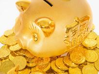 金币上的金猪特写图