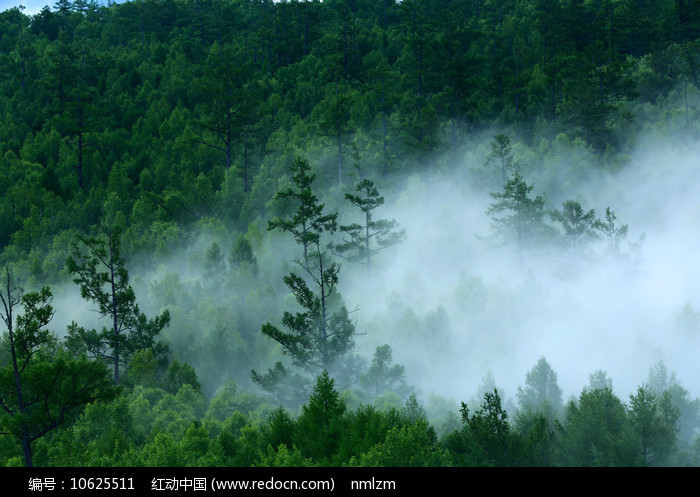 大兴安岭森林云雾图片