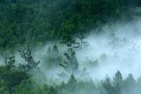 山峦树林晨雾