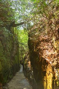杨家界乌龙寨线谷的线状峡谷