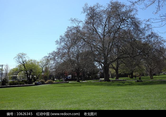 草原大树图片