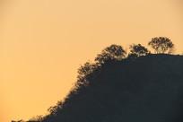 朝霞背景下的山脊