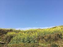 天空下的油菜花