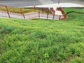 草坪下的楼梯